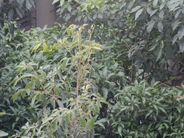 DSCN0250.JPG