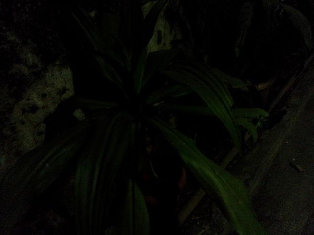 micromax_canvas_hue_camsample_night2_ndtv.jpg