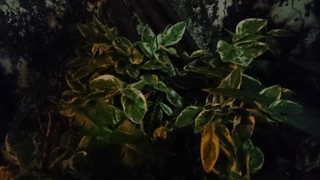 sony_xperia_z3plus_camsample_night1_ndtv.JPG