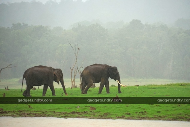 seven_expert_tips_for_wildlife_photography_exposure_ndtv.jpg