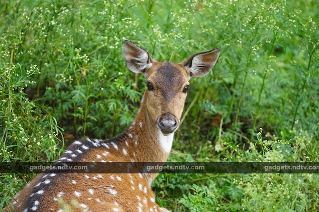 seven_expert_tips_for_wildlife_photography_patience_ndtv.jpg