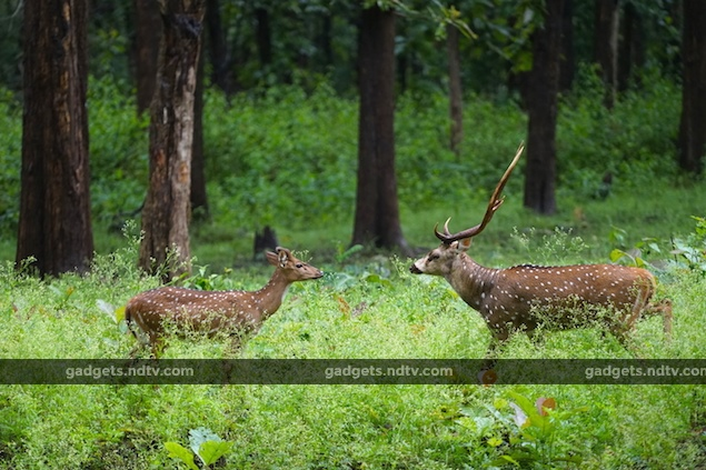 seven_expert_tips_for_wildlife_photography_shutter_speed_ndtv.jpg