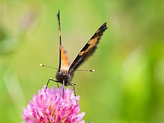 Man In Britain Convicted For Killing Rare Butterflies