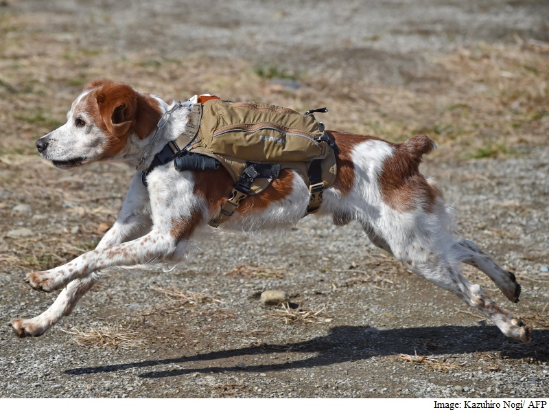Japan 'Robo' Dogs Eyed for Quake Rescue Missions