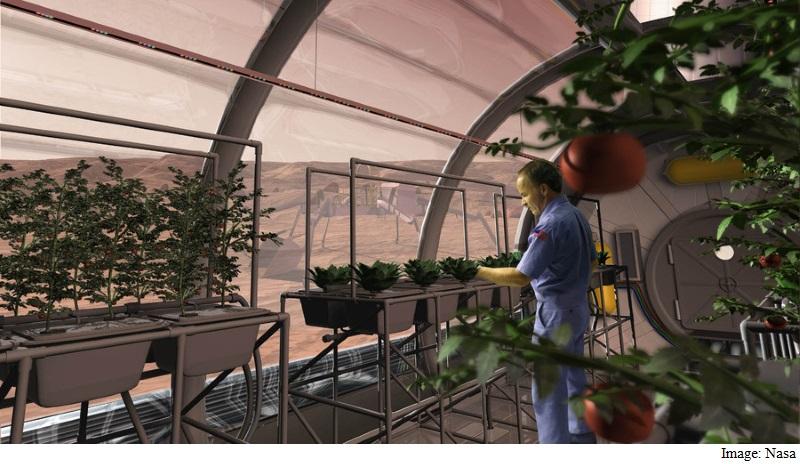 Vegetables Grown on Mars-Like Soil Found Safe for Humans: Study