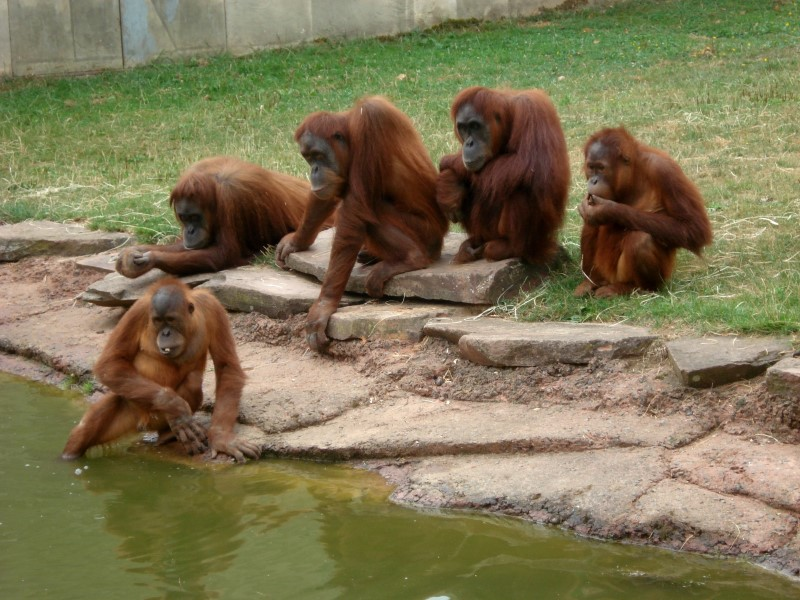 Asian Wildlife Traders Harness Social Media: Conservationists