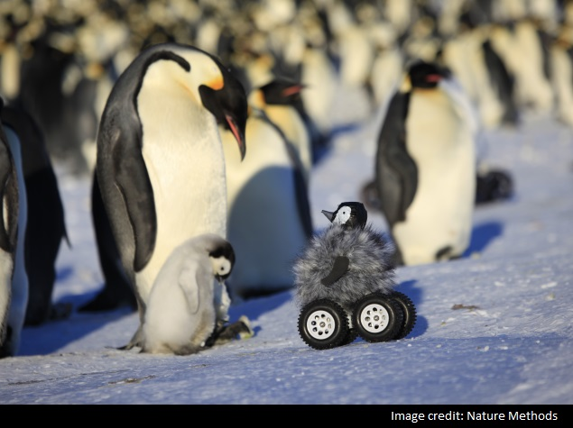Penguin Robot Is a Happy Feat for Science