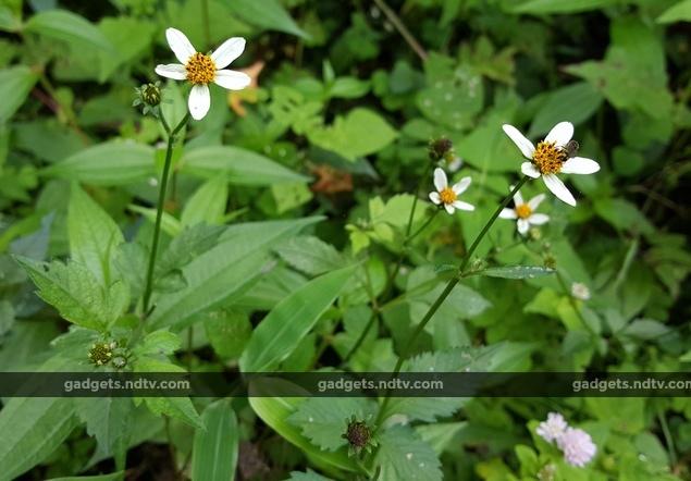 sikkim_flower_insect_ndtv.jpg