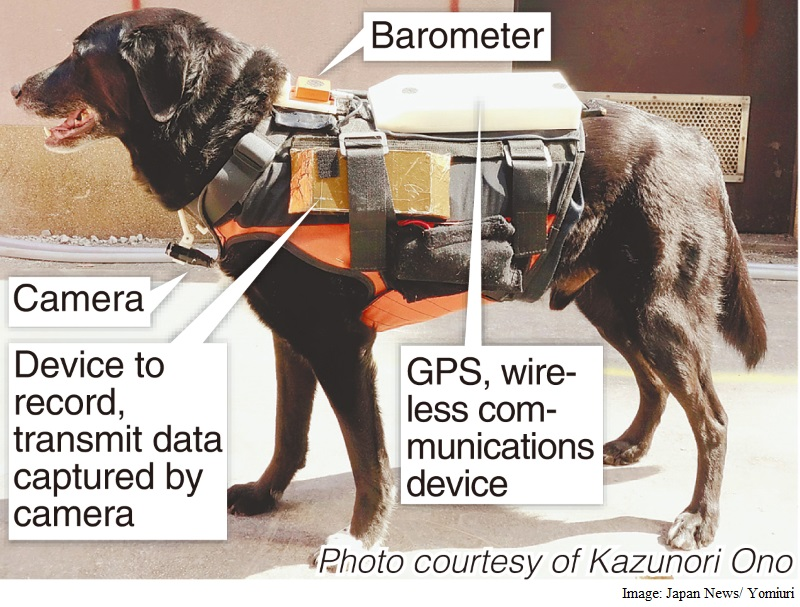 'Robodogs' With Hi-Tech Vests to Help in Disasters