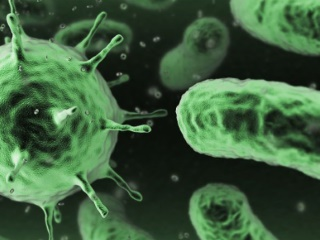 Bacteria Can Be Used to Power Micro-Machines, Including Smartphone Components: Study