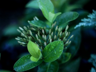 Botanical Survey of India Develops Country's First Online Floral Database