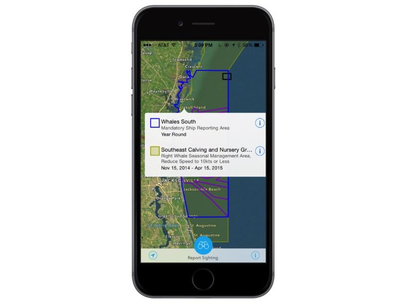 Whale-Finding Phone App Grows in Use, Steering Mariners Away