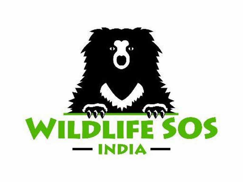 Amazon India Agrees to Remove 'Animal Specimen' Items: Wildlife SOS