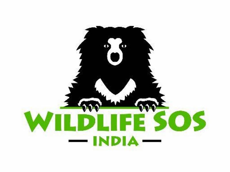 Amazon India Agrees to Remove 'Animal Specimen' Items: Wildlife SOS