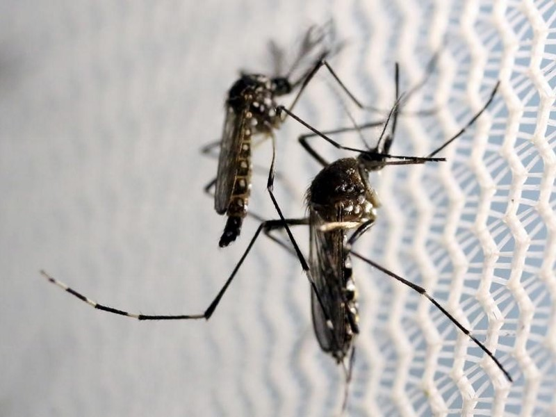 Google Says Its Engineers Working With Unicef to Map Zika