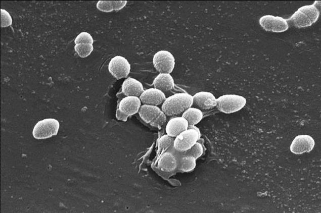 Researchers Use Smartphone App to Study Factors Affecting Gut Bacteria