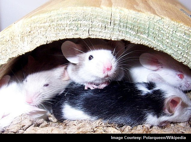 Scientists in Japan Make Mice Transparent