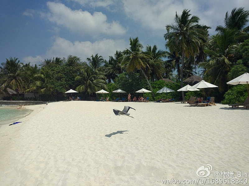 xiaomi_mi_5_camera_sample_lin_bin_weibo.jpg